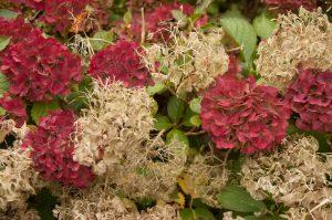 Bloemen van tuinontwerper Eugene de Jong uit Noordwijkerhout